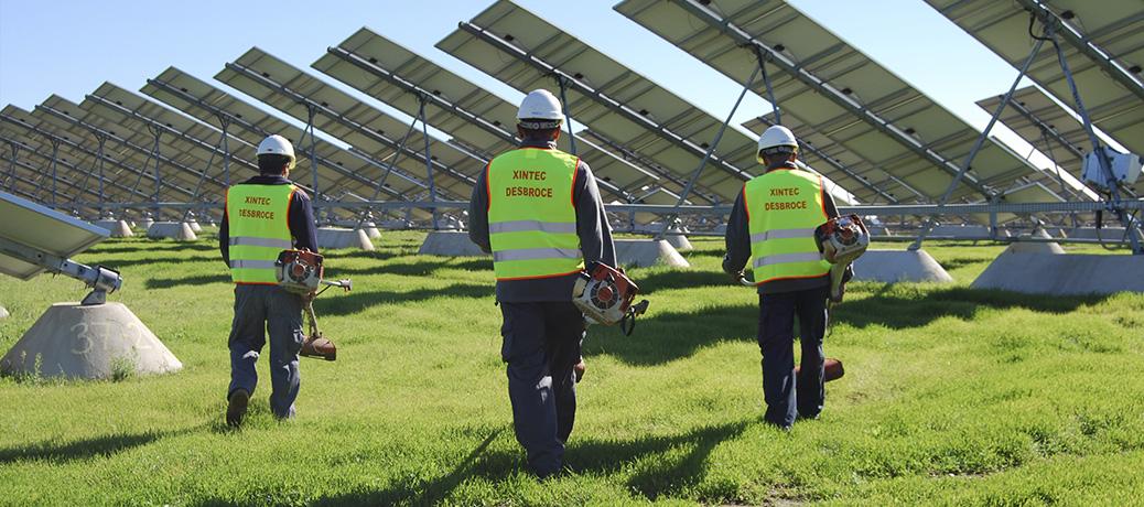 Desbroce de plantas fotovoltaicas