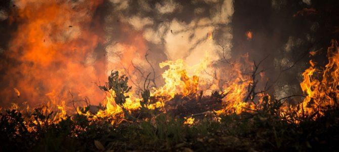 Comienza la época de desbroce de terrenos para prevenir el riesgo de incendios