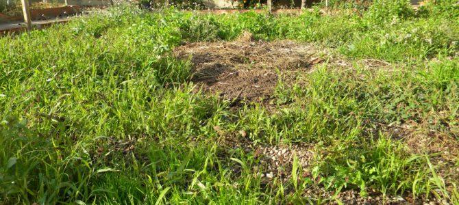 ¿Cómo saber si tu terreno necesita un desbroce?